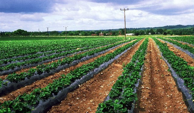 Organic food suppliers cape town